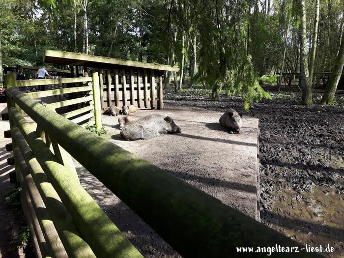 Wildschweine im Wildpark Eekholt in Großenaspe