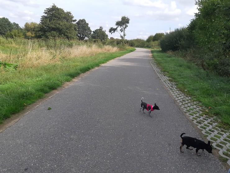 Unterwegs mit Hunde