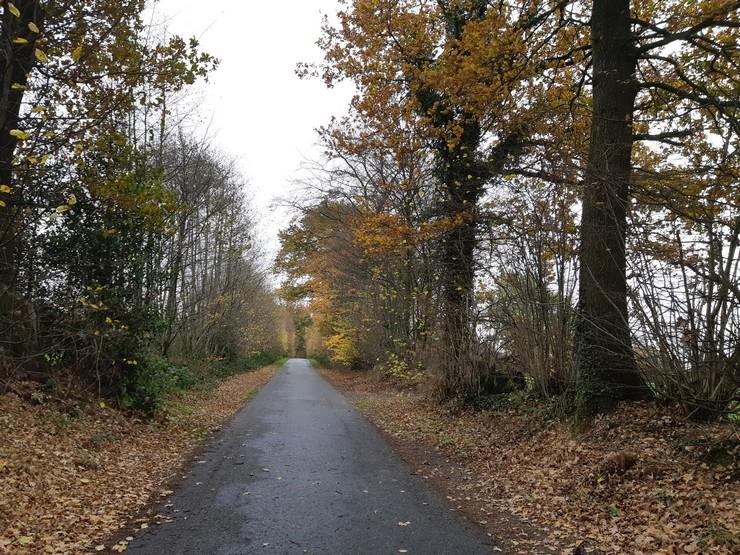 Wochenrückblick Wald
