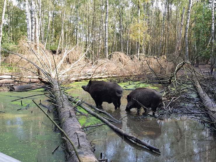 Tierpark Eekholt